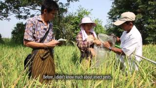 In Myanmar: Farmers tell their stories: Improving livelihoods through rice seed production