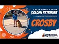 Golden Retriever Crosby   Off Leash Obedience   Reliable Results   Nova Dog Trainers