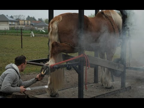 Hot shoeing a draft horse is a tough job. Watch the whole technique in detail.