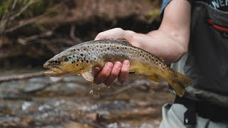 DRY DROPPER Fly Fishing for WILD Trout