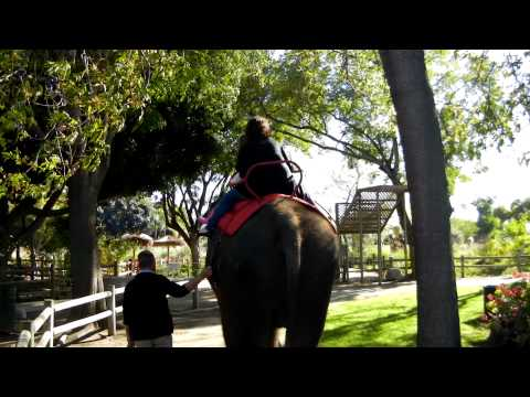 Santa Ana Zoo Elephant Ride