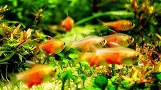 Ikan-ikan Hias cantik dalam Aquarium
