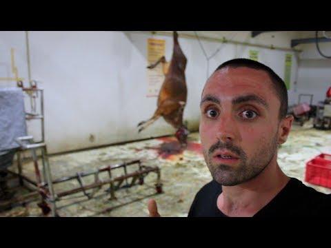 Vegan Witnesses INSANE Halal Slaughter
