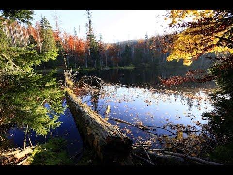 Doku in HD Die letzten Paradiese - Mecklenburg-Vorpommerns Nationalparks