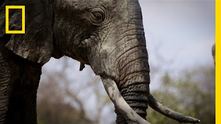How I Got Arrested Working to Save Elephants | National Geographic