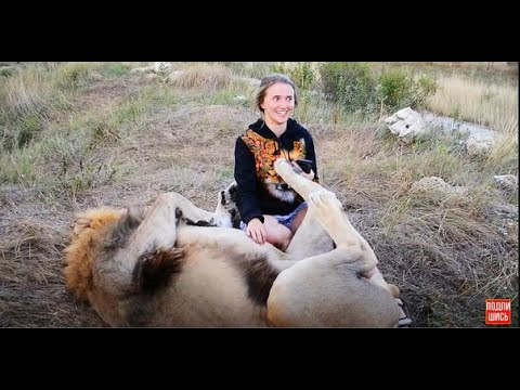 ДЕВУШКА  В ШОКЕ от обнимашек льва Гека !