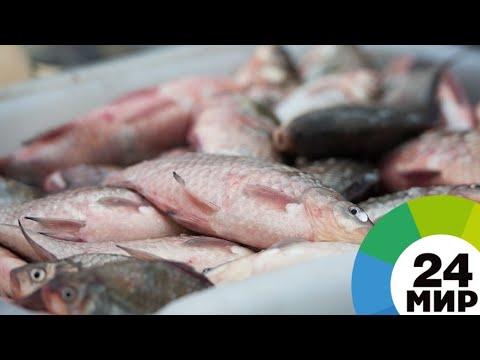 Заразная рыба: как обезопасить себя от паразитов МИР 24