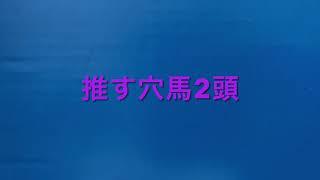 【競馬予想】 新潟大賞典 2021 予想 京都新聞杯