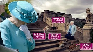 The Queen DEVASTATED by loss of her last remaining corgi: Devoted companion, Willow thumbnail