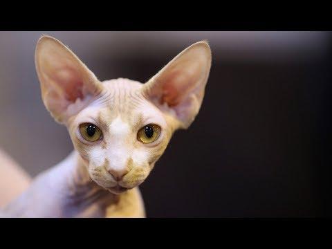 Кошка стала компаньоном человека тысячи лет назад (новости)