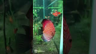 이쁜 물고기가 많이~