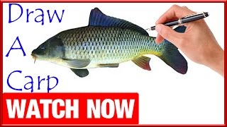 How To Draw A Carp - Learn To Draw - Art Space