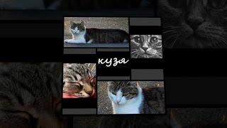 Видео в память о пропавшем коте Кузе.