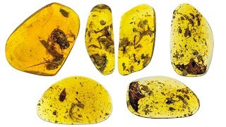 Frogs from Burmese amber of the Cretaceous period. Paleontology of Myanmar.