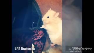 Vlog: Фото моего хомячка Персика