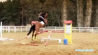 equestrian sport, horse, лошади, конный спорт, верховая езда