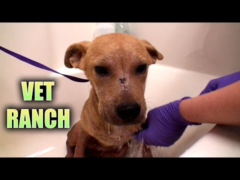 Demodex Pups Get the Help They Need