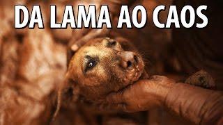DA LAMA AO CAOS - GIRO DE QUINTA