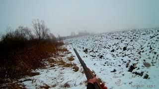 Охота на лис с гончей(Тамбовская Область)