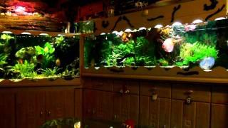Aquariumanlage 19.12.2011