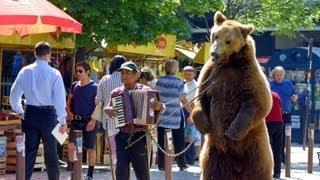 Der letzte Tanz - Die Befreiung der bulgarischen Tanzbären Goscho und Bobby