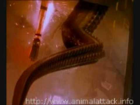 Movie Stills From Octopus 2000