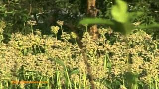 Smart Farm: Sorghum Farming