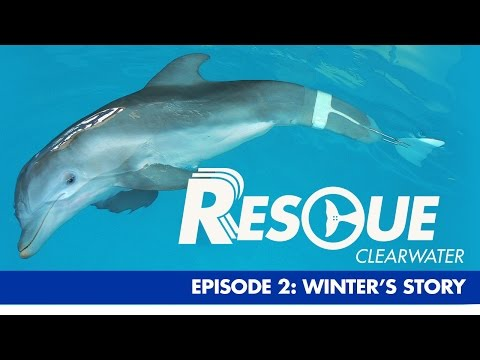Winters Story - Rescue-Clearwater Season 1: Ep. 2