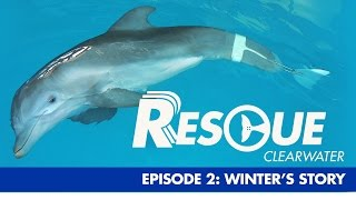 winter-s-story-rescue-clearwater-season-1-ep-2