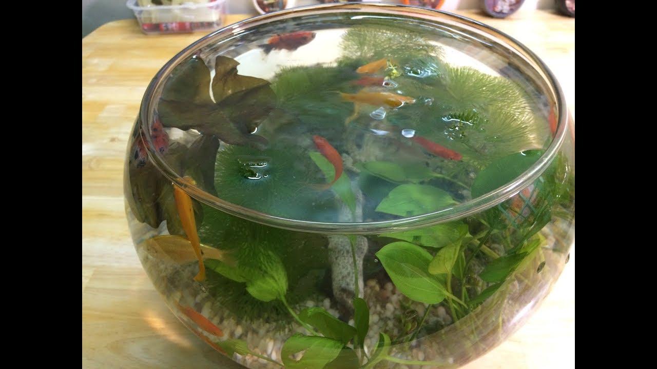 Bể Cá Cảnh Thủy Sinh Mini Để Bàn – Hướng Dẫn Cách Setup Bể Cá Thủy sinh