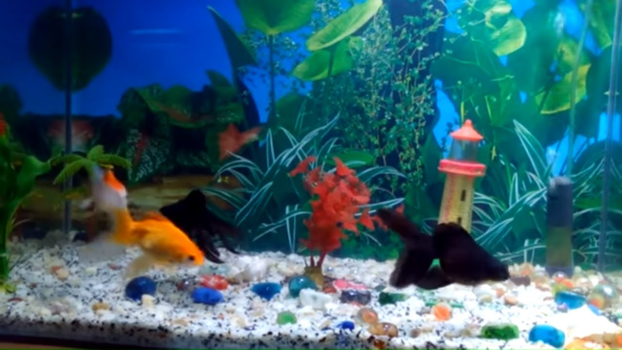 Fish aquarium in bangladesh - Fish Aquarium In Bangladesh