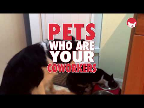 Pets Who Are Your Coworkers