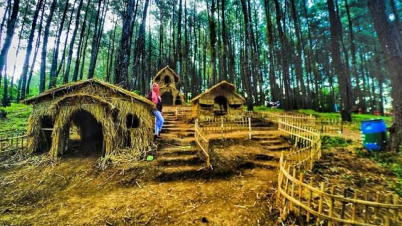 Wisata Jombang Terbaru Hutan Pinus Carangwulu Youtube