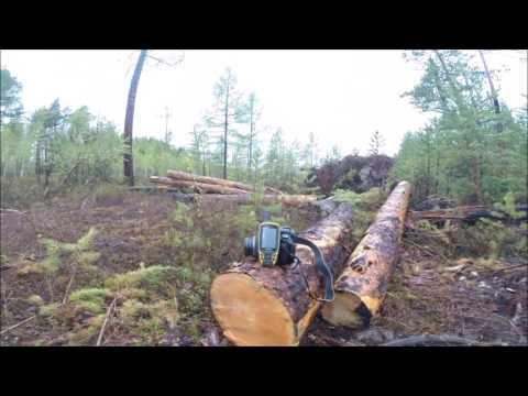 Куда уходят деревья?