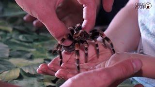 ragadozók paraziták gyűjtők)