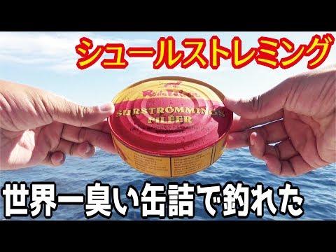 世界一臭い缶詰「シュールストレミング」を餌に釣りをしてみたら!
