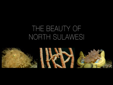 4K The Beauty of North Sulawesi