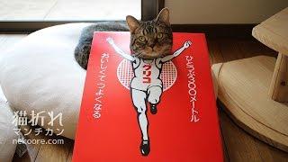 グリコのロゴマーク「走る人」こと「ゴールインマーク」【顔はめ猫】-Glico sign logo