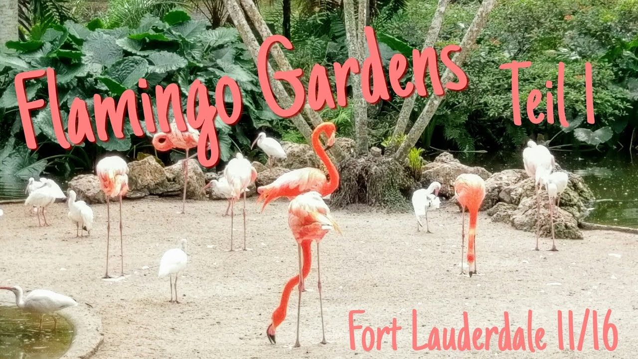 Flamingo gardens 1 fort lauderdale sausage tree usa - Flamingo gardens fort lauderdale ...