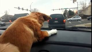 Dog and wipers