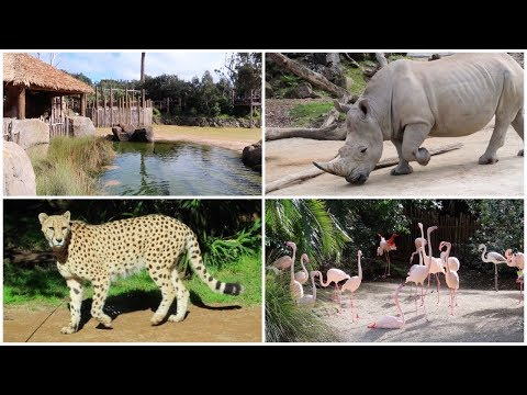 Auckland Zoo 2017 Tour and Overview | ZooBoyNZ