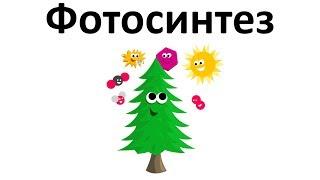 10. Фотосинтез (6 класс) - биология, подготовка к ЕГЭ и ОГЭ 2018
