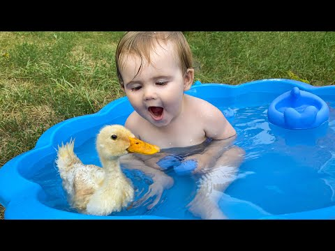 Funny Baby Reaction to Duckling in the Pool