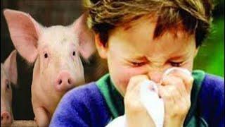 إنفلونزا الخنازير ظهرت اليوم في الصين صدق الله ورسوله آيات عظيمة تتجلي أمام آلاف الناس ونحن غافلون !