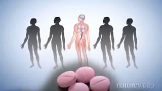 видео Клиническая фармакология непрямых антикоагулянтов