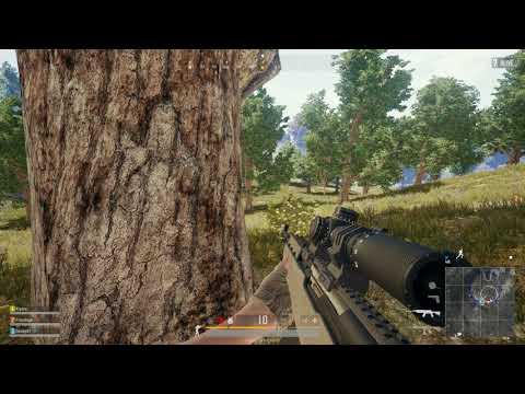 Tree headshot