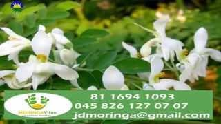 Moringa Documental La Planta más completa en Nutrientes