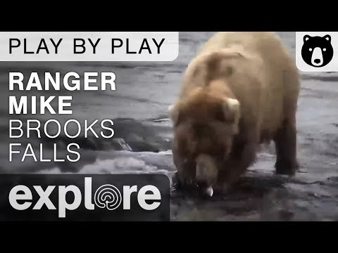 Ranger Mike On the Bears of Brooks Falls - Katmai National Park - Live Chat