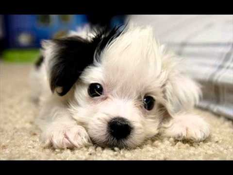 The World S Cutest Dog Wallpaper Youtube