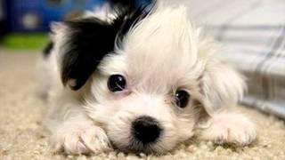 The world's cutest dog wallpaper screenshot 4